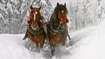 sleigh-rides-fpo