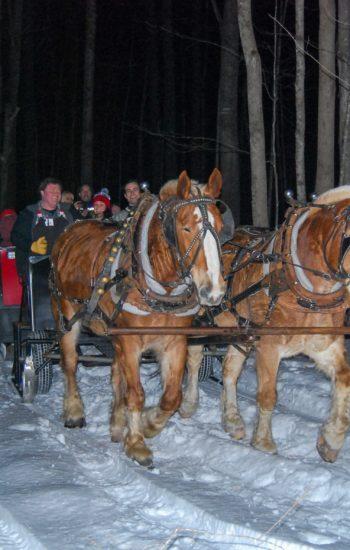 Sleigh Rides Winter