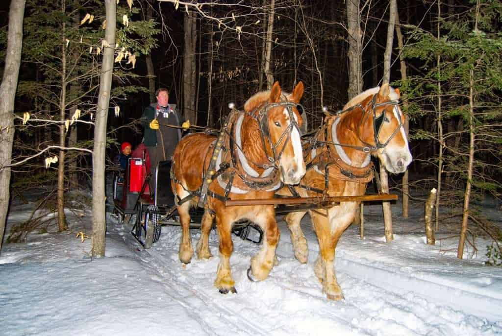 Winter Sleigh Ride Horses