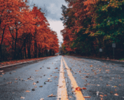 roadway with foliage